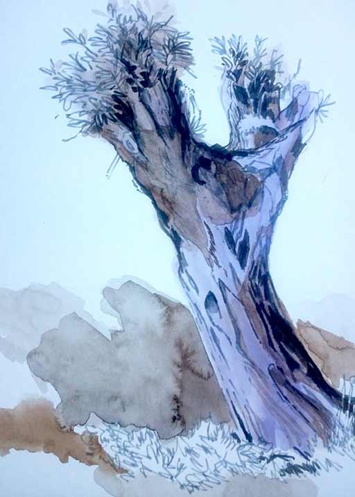 Zeichnung Weide